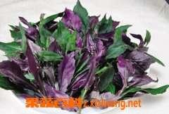 红凤菜的药用价值和功效